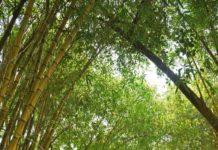 Mekosha Hospitality, wellness retreats, india