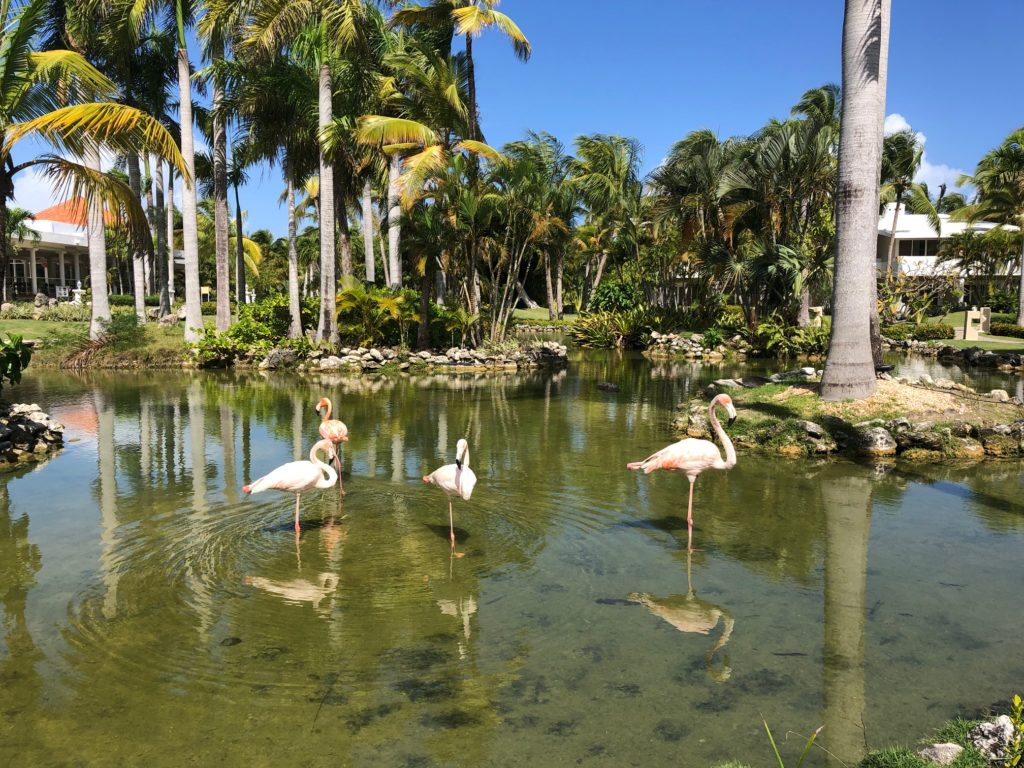 Flamingo Oasis, Melia Punta Cana Beach Resort