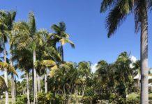 Melina Punta Cana Beach Flamingo Oasis
